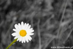 Zdjęcie-0261